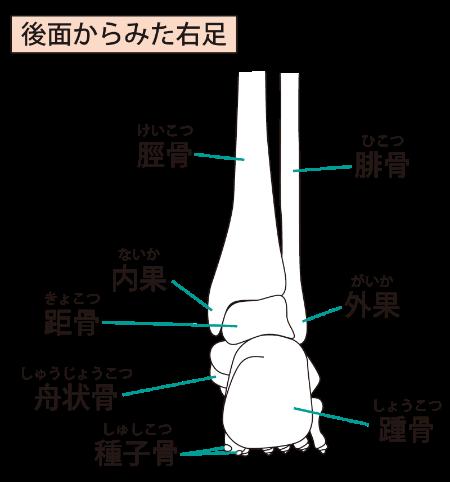 足 関節 外 果 骨折